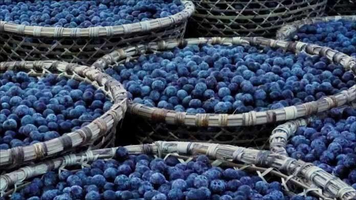 Açaí is Brazil's Superfruit: What is it again?